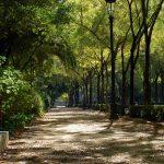 El Parque de María Luisa se muere