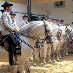 """""""Como bailan los caballos andaluces"""", este miércoles en la Maestranza"""