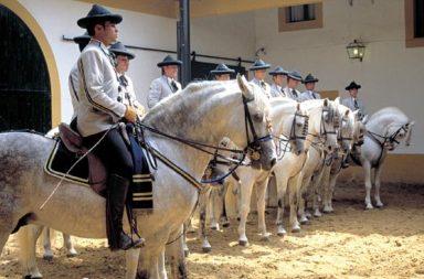 Como bailan los caballos andaluces.