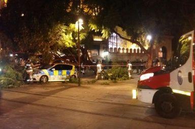 El patrullero, destrozado tras la caída del árbol.