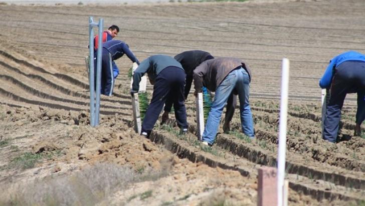 El gobierno, dispuesto a reducir la peonadas para acceder al subsidio agrario.