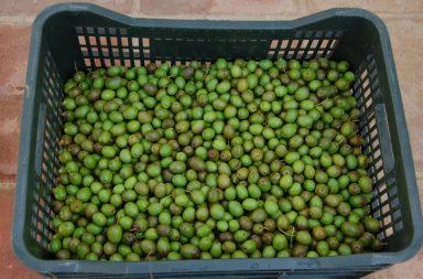 Cajón con aceitunas verdes