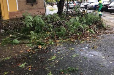 Preocupación por la recurrente caída de árboles.