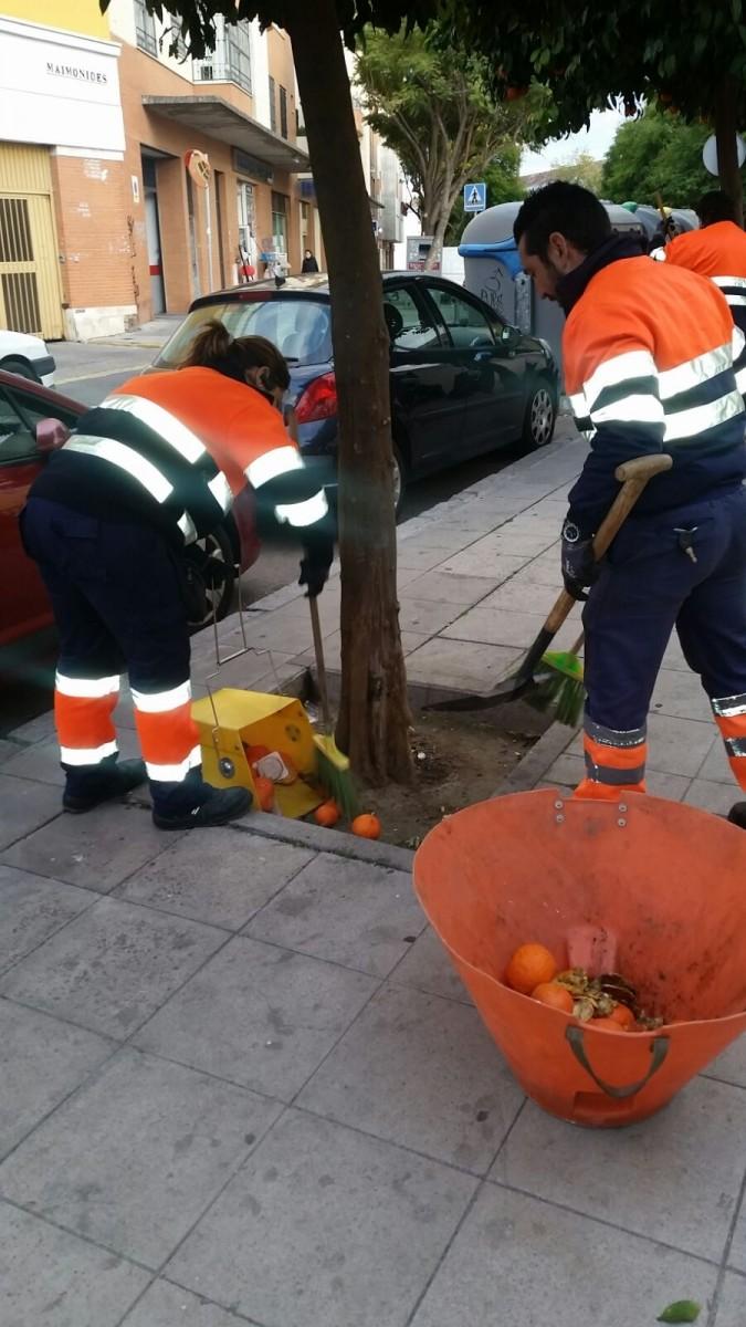Los trabajos se desarrollarán su labor durante aproximadamente un mes con la recogida de 2,7 millones de kilos de naranjas amargas. Las empresas adjudicatarias del servicio llevan recogidas el 55%