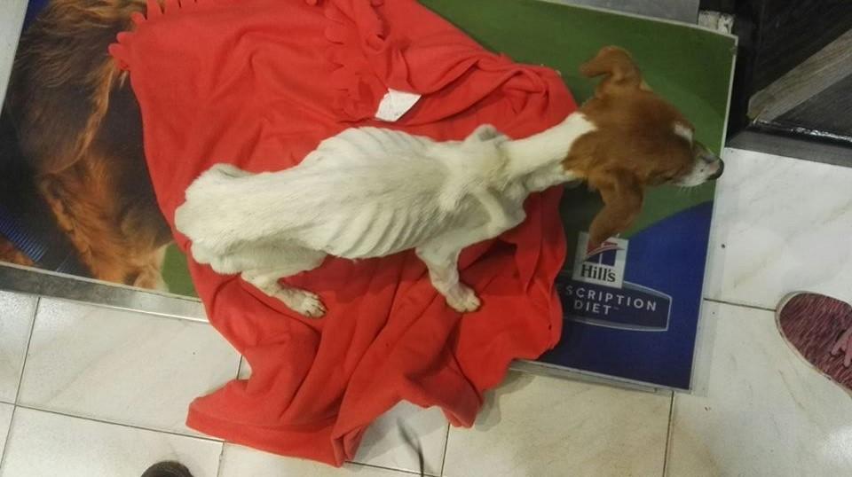 Estado de uno de los perros de la finca que mantenían encerrado sin comida ni agua
