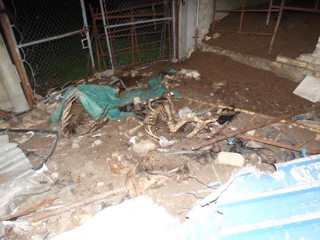 Restos de cadáveres de animales esparcidos por la finca