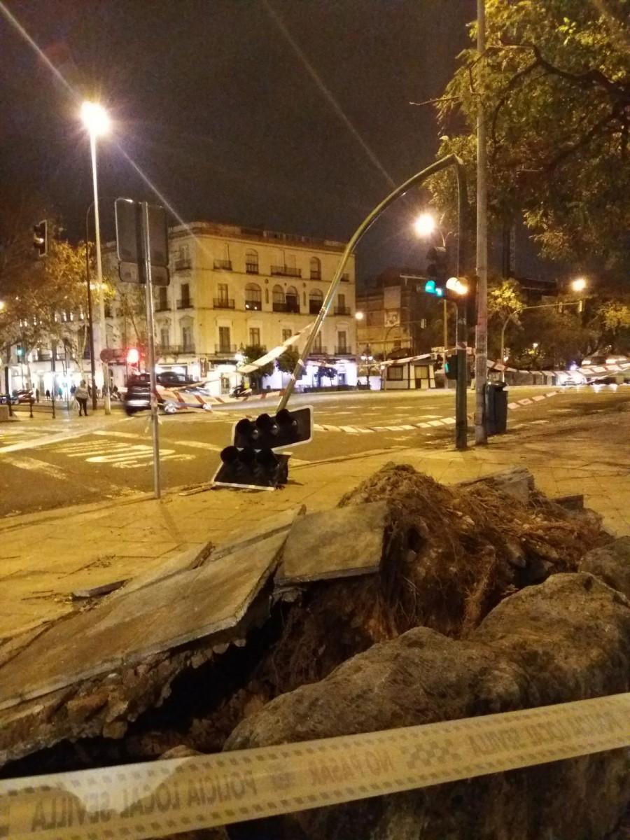 Uno de los grandes árboles arrancados por el fuerte viento, en calle Arjona frente a las Naves del Barranco