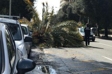 Palmera caída sobre un vehículo en Avenida Blas Infante