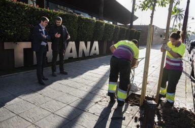 Plantando un árbol
