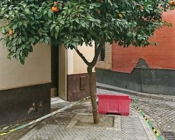 """Naranjos abonados con cemento""""Así se construye la #sevillaverde en Calle Fabiola, alcorque con cemento fresquito ¡que horror!"""""""