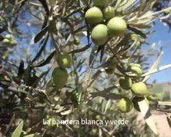 Los atufados por el video de la Junta usurpan y confunden un acento y un color con Andalucía (Video)