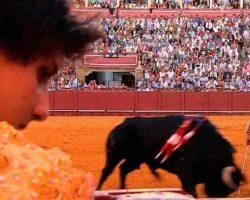El mundo del toro, pendiente de Córdoba: Vuelve el duelo Aguado-Roca ReyLas máximas figuras se reencuentran dos años después de la corrida que consagró al sevillano con el limeño como mero espectador en el ruedo