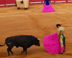 Morante, de bragueta y artista, puso bocabajo la plaza de toros de Jerez