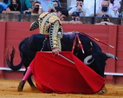 Toros en Sevilla: Roca cortó la oreja, pero Aguado volvió a ganarle; Morante es otro mundo